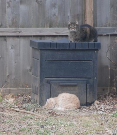 kitties-compost
