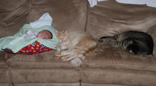 anna-cats