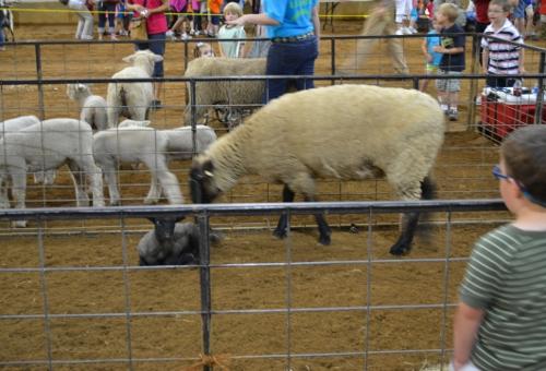 sheep farm freinds