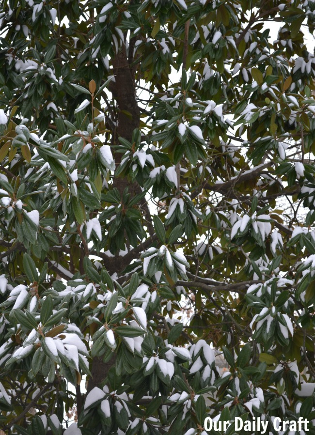 snow in magnolia
