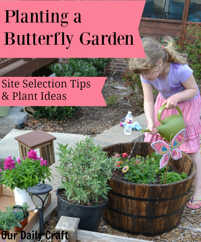 Tips for planting a butterfly garden