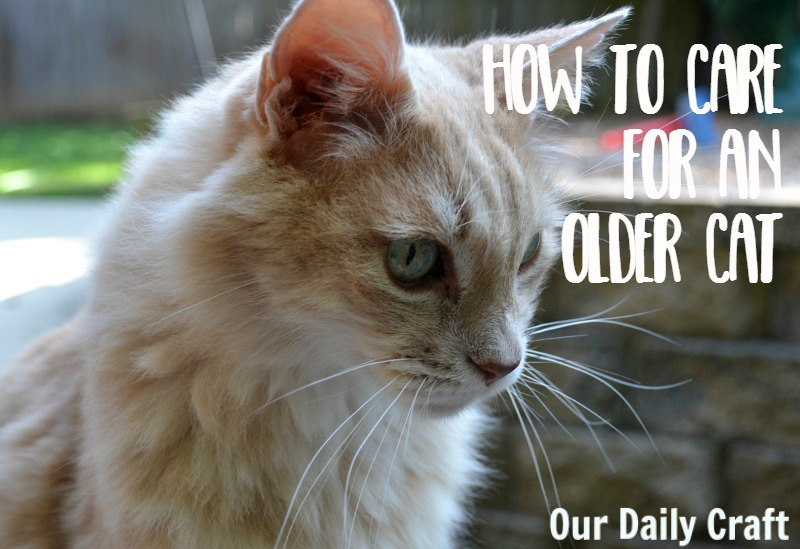 How to Take Care of an Older Cat