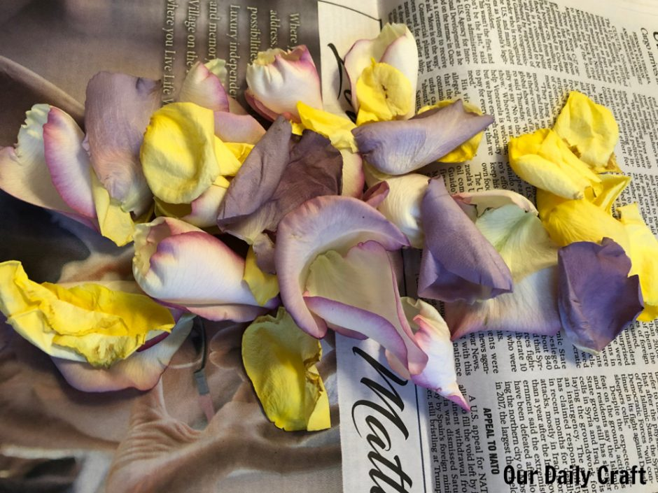 rose petals for making rose water
