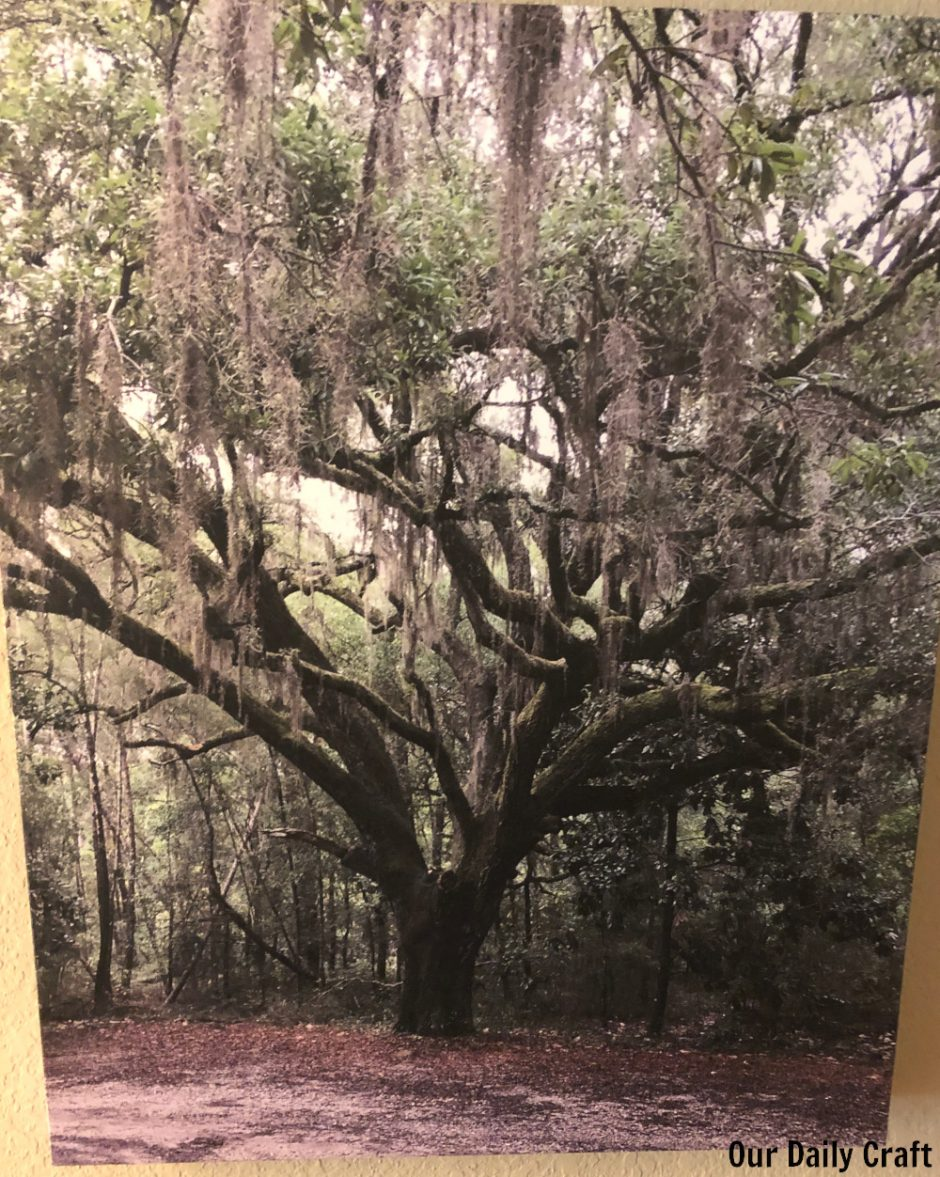 tree canvas printed photo